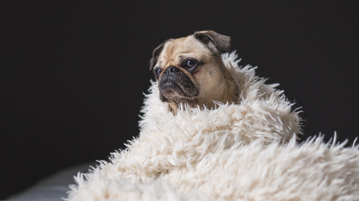 Wellness Watch 2019: 5 Irresistible Instagram Accounts for Animal Lovers
