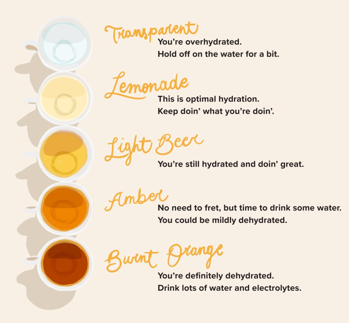 Hydration Chart: Learn to Read the Shades of Your Pee