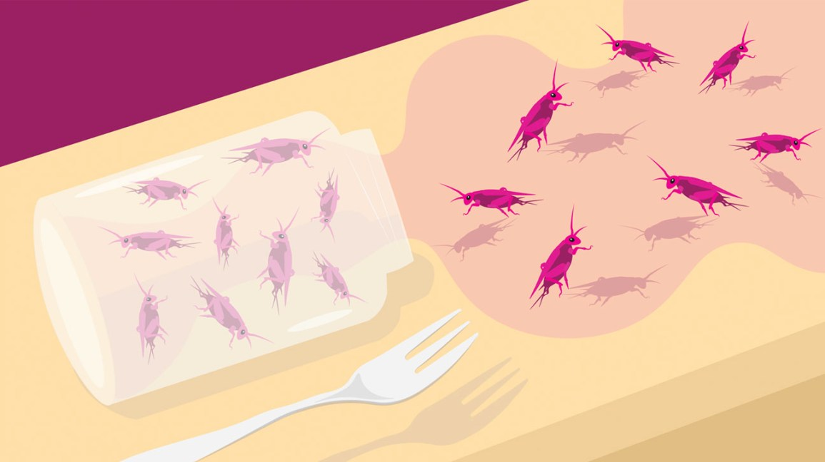I Hate Bugs. But Here's Why I Tried Insect-Based Food