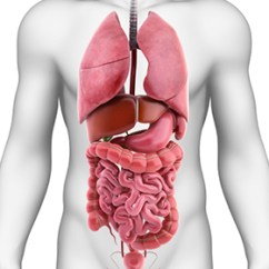 Where Is Human Liver Located Diagram Air Compressor Capacitor Wiring Spleen Removal: Types, Benefits, And Risks