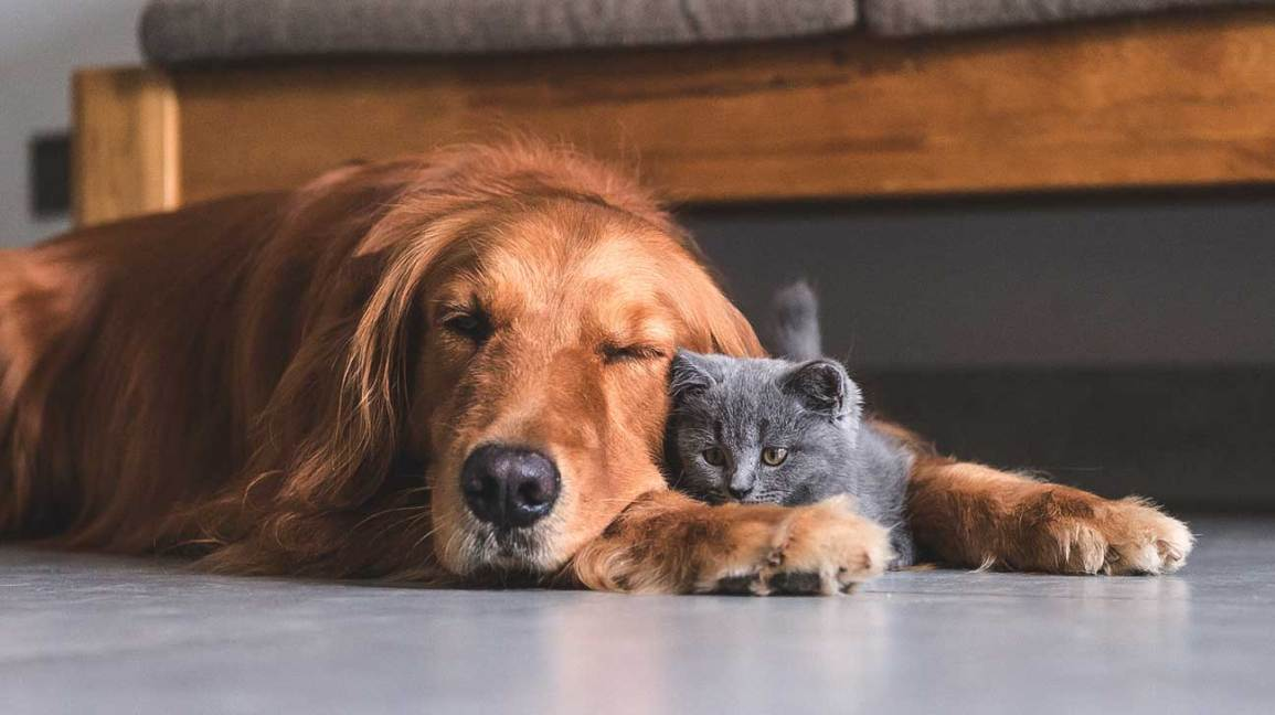 spoonie s best friend the healing power of animals