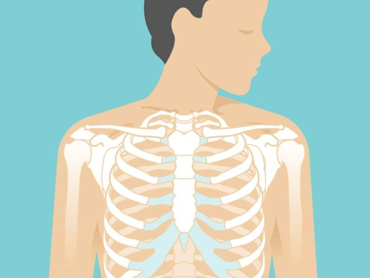 Sternum Area, Anatomy & Pictures | Body Maps