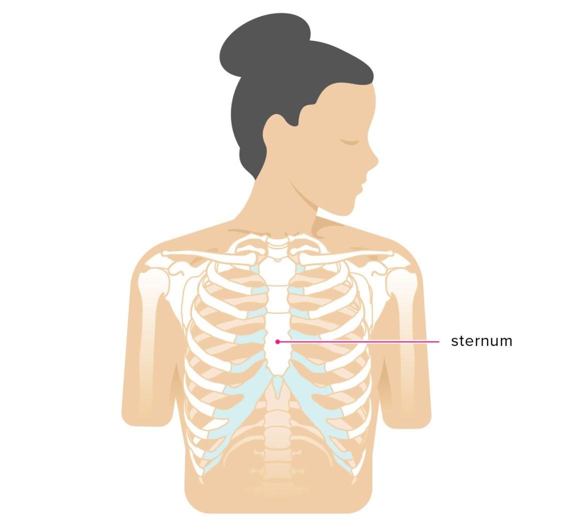 Broken Sternum Symptoms Car Accident Treatment And More