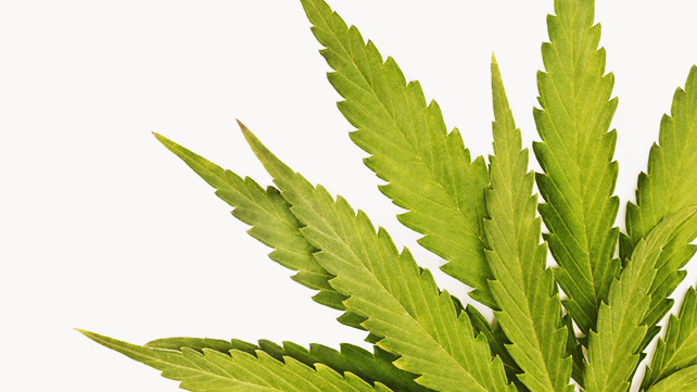 What is the best way to detox from weed