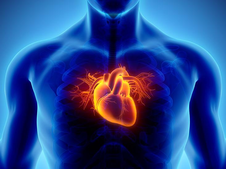 Ilustrasi jantung koroner