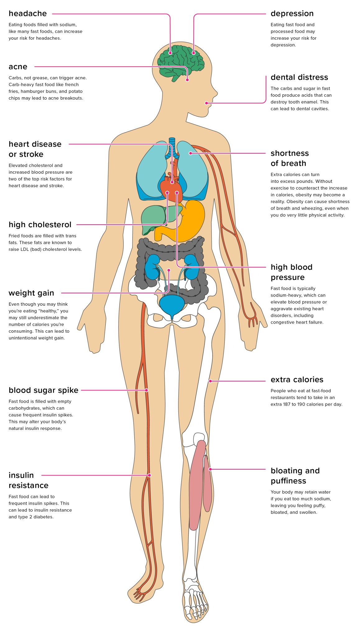 13 Effects Of Fast Food On The Body This Diagram Shows Muscles In Heart