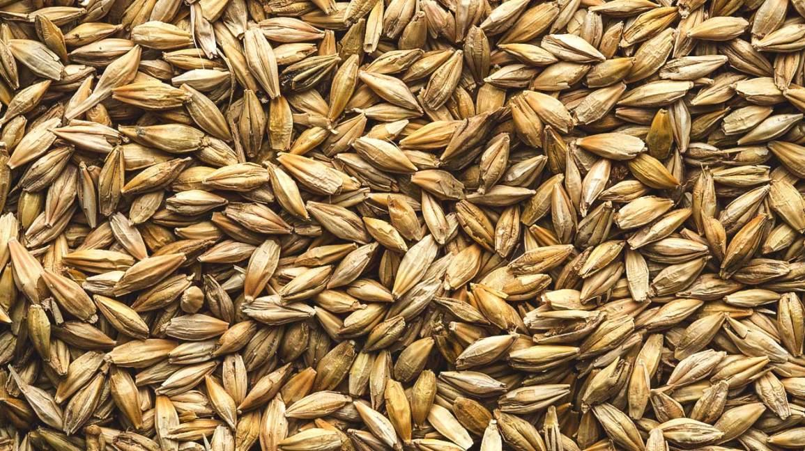 Whole Wheat Food Sensitivity