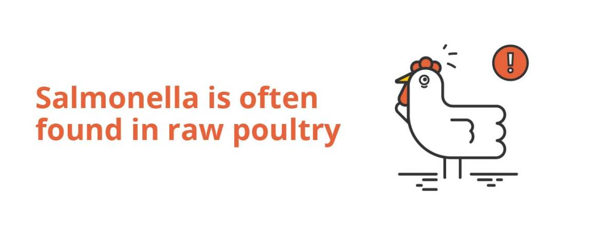 salmonella in raw poultry