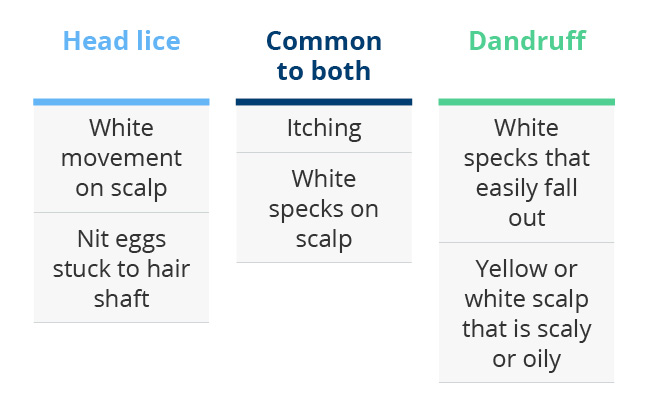 Lice Vs Dandruff How Do I Tell The Difference