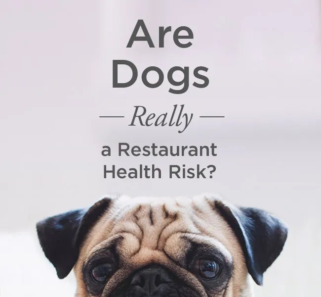 Are Dogs Really A Restaurant Health Risk