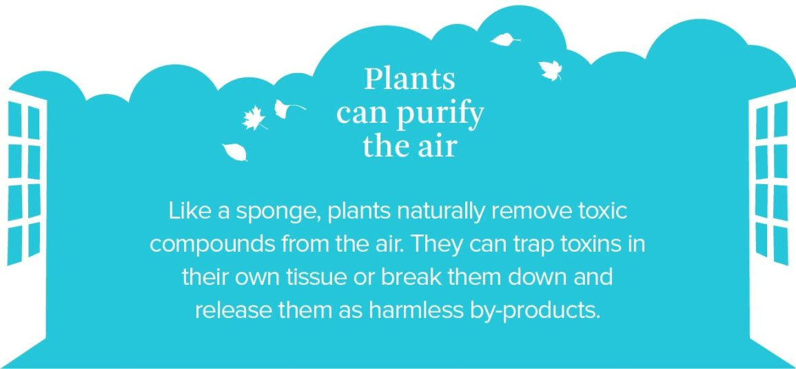 plants can purify air