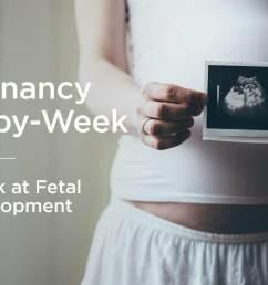 fetus fetal development week by week [ 1296 x 728 Pixel ]