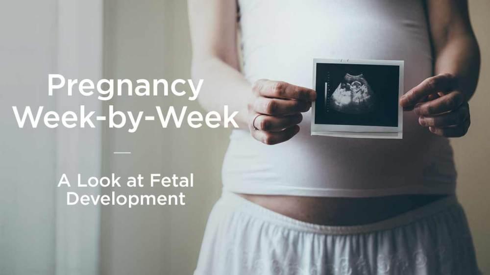 medium resolution of fetus fetal development week by week