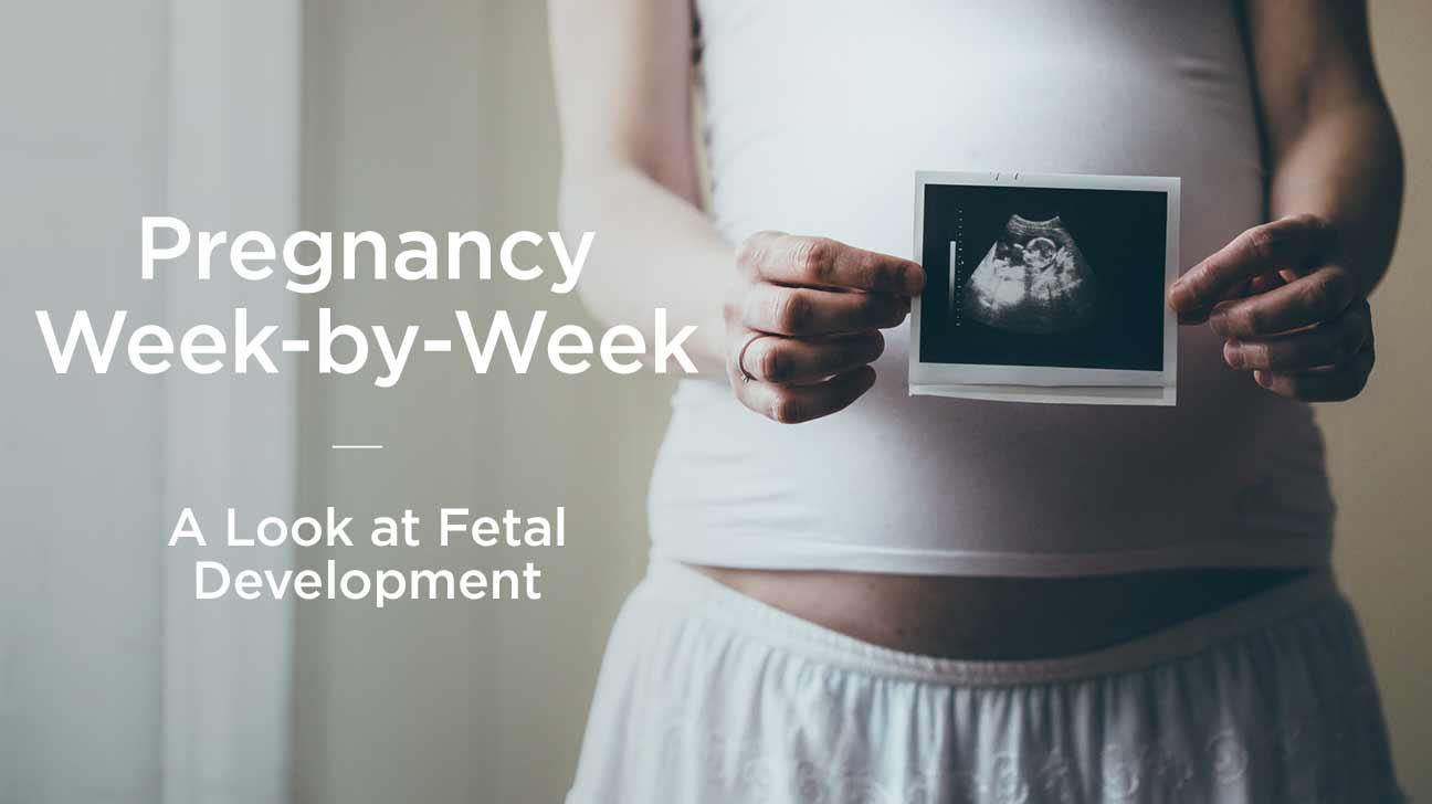 hight resolution of fetus fetal development week by week