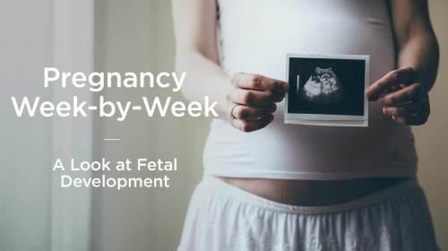 small resolution of fetus fetal development week by week