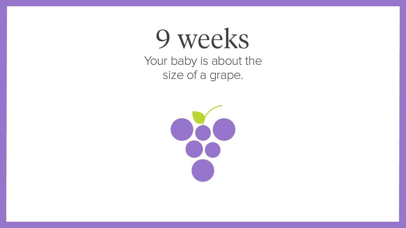 pregnancy by week calendar