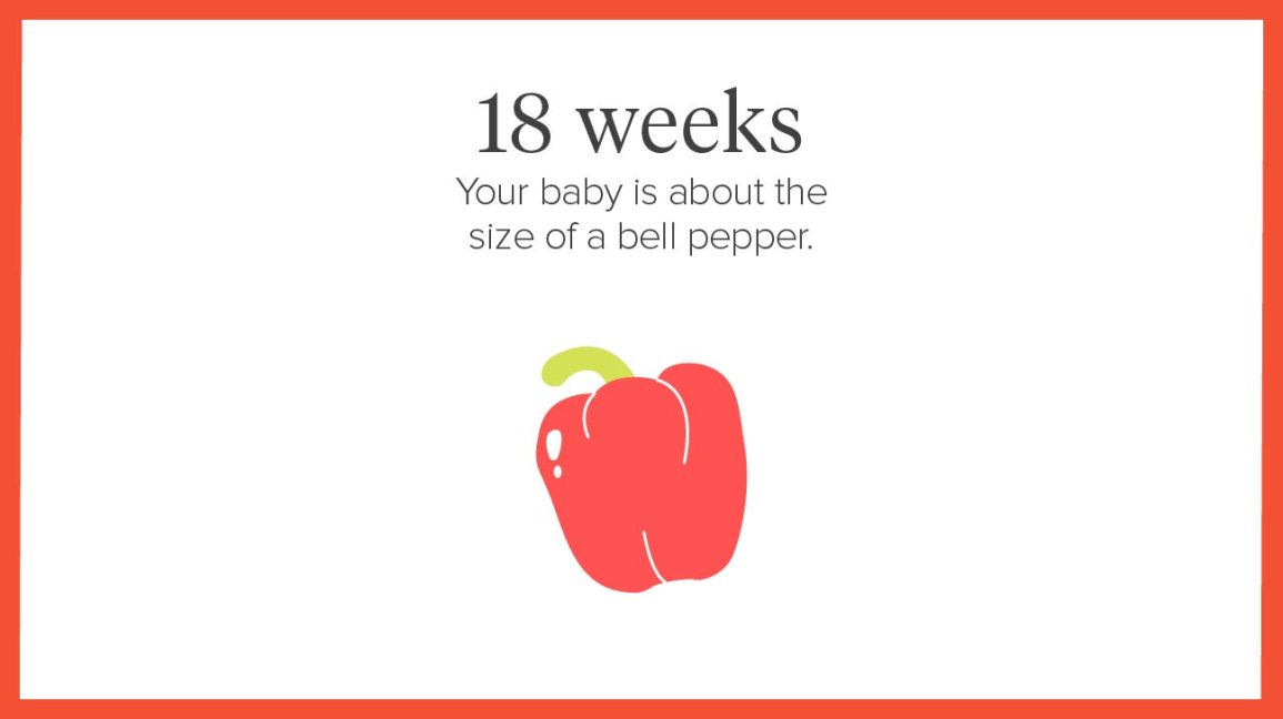 18 weeks Share on Pinterest