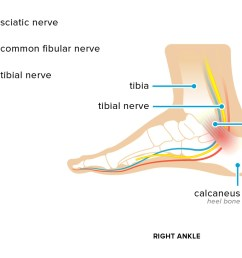 ankle tendon diagram [ 1297 x 729 Pixel ]