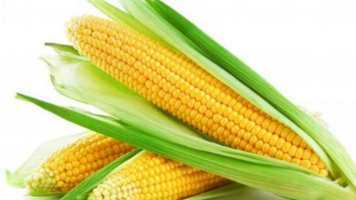 benefits of corn