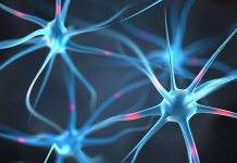 increase gamma waves in the brain