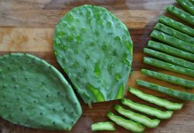 nopal cactus health benefits, nopal cactus benefits, health benefits of nopal cactus, nopal cactus