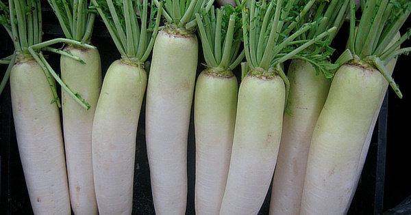 benefits of radish