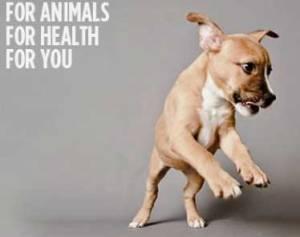 Eine gelungene Facebook-Strategie: Als Zoetis aus der Pfizer-Animal-Health-Familie als eigenständige Brand hervorging, musste der unbekannte Name etabliert werden. Zoetis konnte allein im ersten Monat über 100.000 Facebook-Fans verzeichnen.
