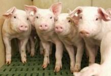Community Building für Tierärzte