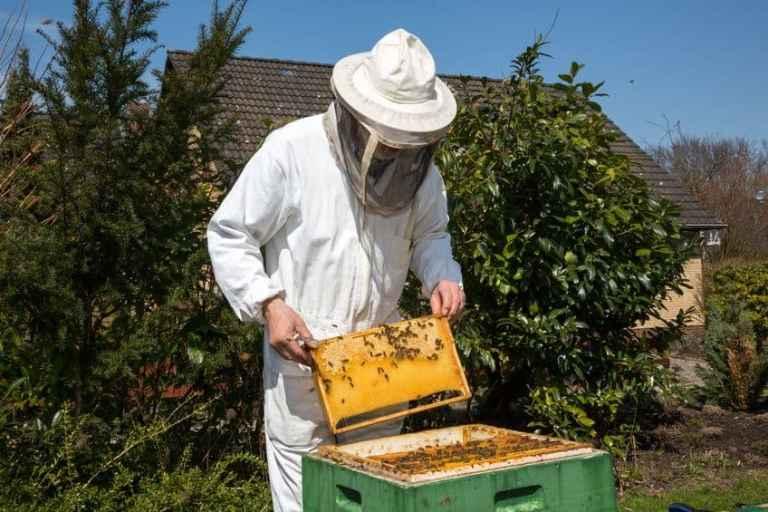 Apicoltore che ritira il miele
