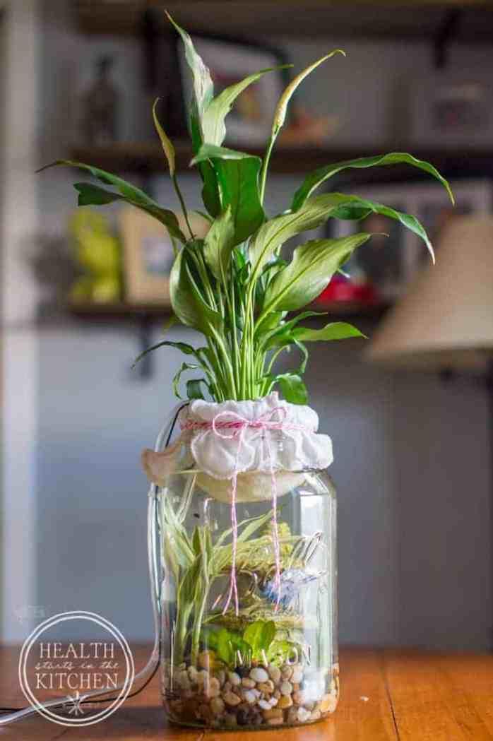 Best Indoor Plants for clean air, best indoor plants for low light, large indoor plants, indoor plants for sale, planter ideas final-feature-aquarium-photo