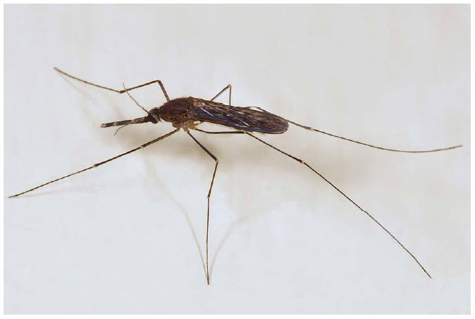 Mosquito Control Continues in the Fraser Valley