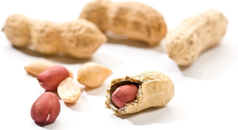 Peanut Allergy Treatment Discovered