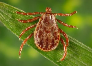 A New Fatal Virus Was Found In New York Ticks