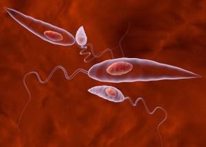 Leishmania The Deadly Parasite Could Become The Next Plague