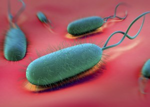 The Helicobacter Pylori Bacteria Increases The Risk Of Stomach Cancer