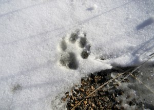 Dog Owners Charged With Animal Cruelty After Letting Dog Freeze to Death