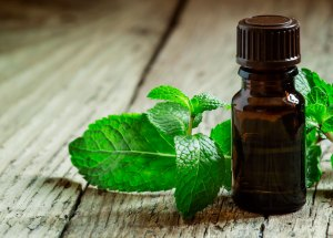 Peppermint Decreases Appetite And Is Ideal For Losing Weight, Study Says