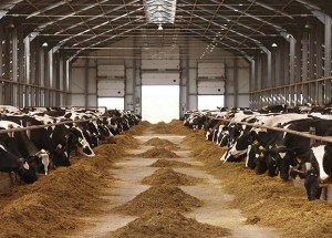 A New Research On Global Animal Compound Feed Market Has Been Published