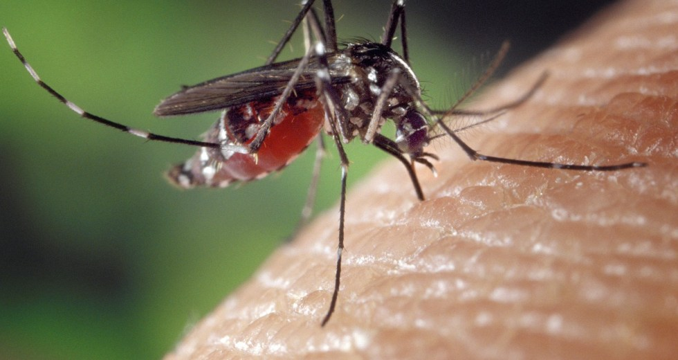 Mosquitoes Remember Threats And Avoid Them In Future