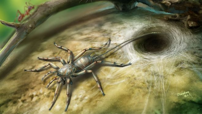 100 Million-Year-Old Spider Fossils Found Trapped In Amber