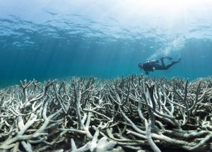 Coral Paradise from the Heron Island Involved in Climate Change