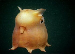 Scientists have made an Amazing Discovery in the Deep Sea