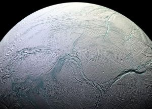 Microscopic Organisms to Survive the Environment of Enceladus?