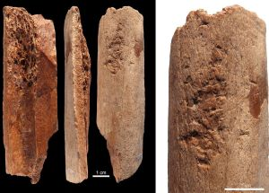 New Prehistoric Bone Tools Have Been Found in China