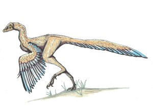 Archaeopteryx Was A Dinosaur-Bird Hybrid That Resembled Turkeys And Pheasants, A New Study Reveals