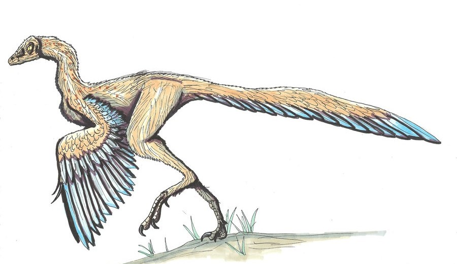 Archaeopteryx Was A Dinosaur-Bird Hybrid That Resembled Turkeys And Pheasants, A New Study Reveals