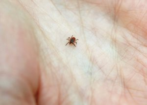 How to Stay Away from Tick Diseases this Summer