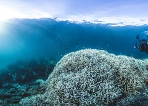 The Great Barrier Reef is in Danger and This Will Affect Humanity as Well