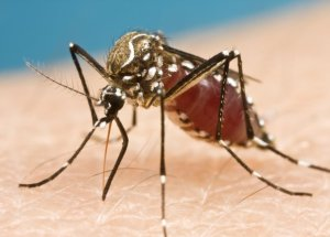 Qubec Is Facing Twice As Many Malaria Cases Than Previously – Quebeckers Return Home With Malaria