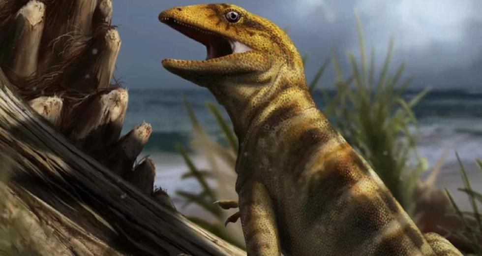 Ancient Reptile Megachirella, Found 20 Years Ago, Recently Unveiled As The Ancestor Of All Lizards